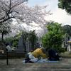 桜、墓地、将棋