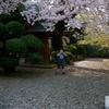 桜、少年、笛