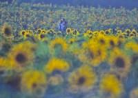 NIKON NIKON D3Sで撮影した(太陽がいっぱい)の写真(画像)