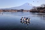 氷上群鴨(再現像)