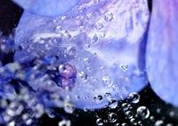 NIKON NIKON D800Eで撮影した(雨中の花宇宙)の写真(画像)