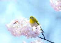 NIKON NIKON D800で撮影した(春 色)の写真(画像)