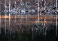 NIKON NIKON D800Eで撮影した(光条霧Ⅱ)の写真(画像)
