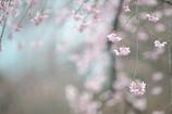 spring for tokyoites 2017