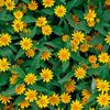 満開の夏の花