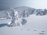 白い山を仰ぐⅠ