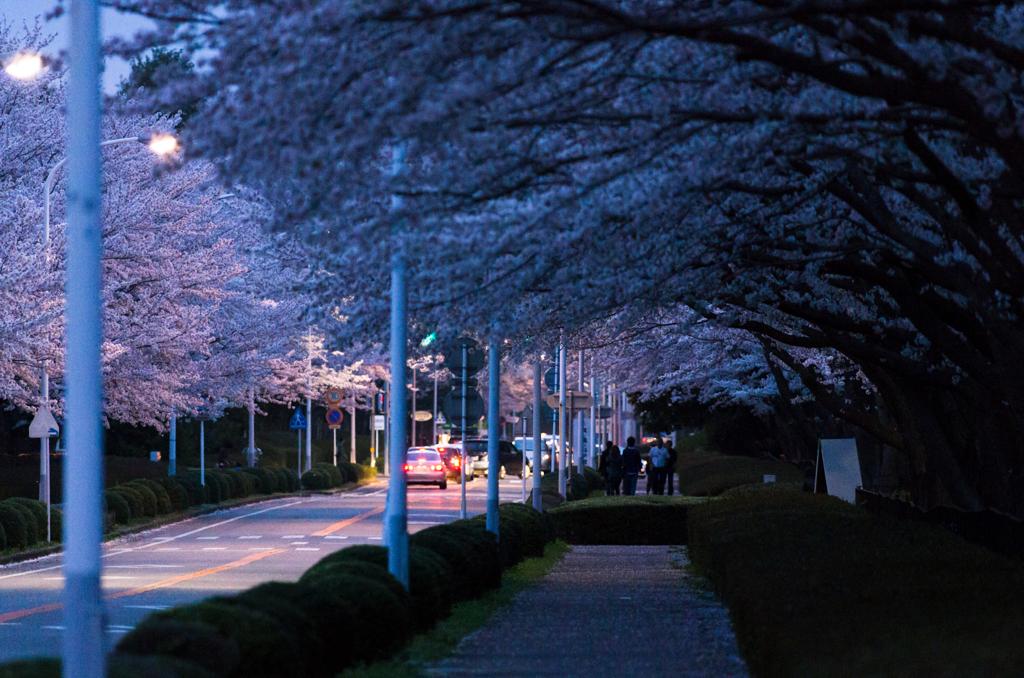 アニメ映画『秒速5センチメートル』を徹底解説! …