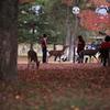 秋色奈良公園