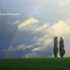 虹の立つ丘Ⅱ