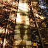 枯れ葉とトロッコ道