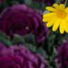 大阪城公園に咲く花