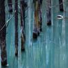 青い池に忍び寄る影