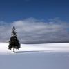 3月26日のツリー