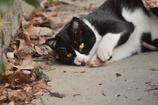 京都御苑の猫1