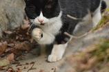 京都御苑の猫2
