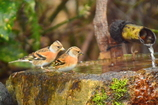 京都御苑の小鳥達3