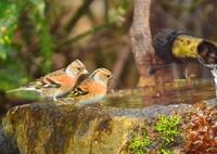 NIKON NIKON D7100で撮影した(京都御苑の小鳥達3)の写真(画像)