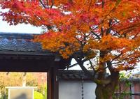 NIKON NIKON D7100で撮影した(西梅津神明社の紅葉3)の写真(画像)