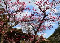 NIKON NIKON D7100で撮影した(城南宮・芹川天満宮の梅1)の写真(画像)