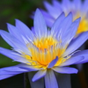 極楽浄土の花3