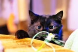 猫の日2017 (reo)