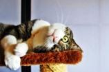 猫の日2017 (sora)