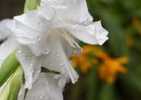 CANON Canon EOS 5D Mark IIIで撮影した(雨もいいけど…)の写真(画像)