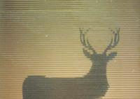 CONTAX RTSIIIで撮影した(鹿)の写真(画像)