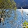 西湖(山梨県)