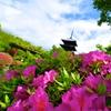 京都 東寺 五月