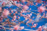 ほんわか色の春