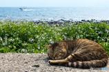 春の海辺はお昼寝日和