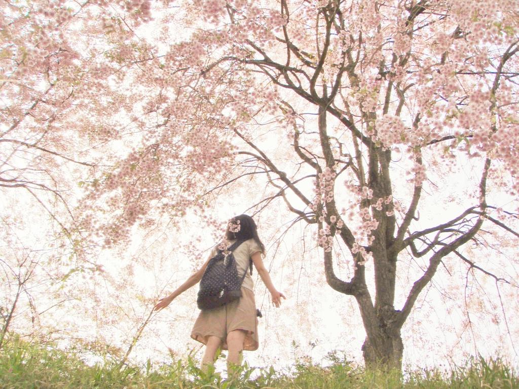 春風 撮影:hachi  春風の写真