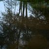 溜り水の樹木