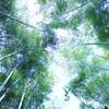 嵐山 :::