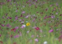 RICOH IMAGING PENTAX K-3で撮影した(夏から秋への準備)の写真(画像)