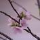 桜の咲く春