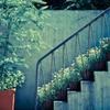 カイダンの花