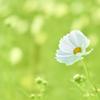 White in Yellowish green
