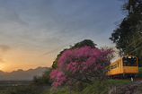 Amygdalus persica and Railway...Twilight