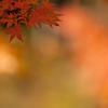 秋色 その1