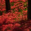 紅色の輝き