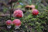 森の中 3
