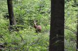 森の木陰で 2