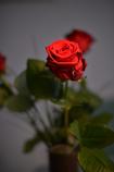 誕生日にはバラを