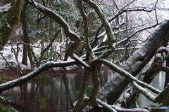 厳寒の丸池様-2