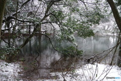 厳寒の丸池様-3