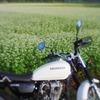 Buckwheat field and CB223S