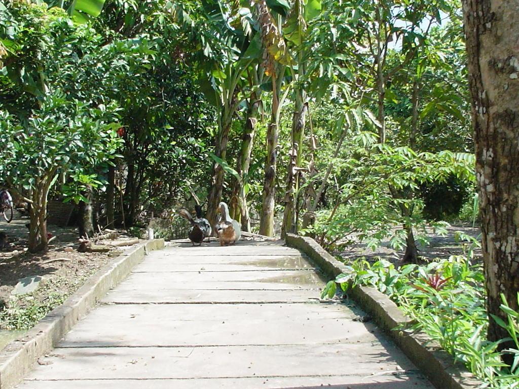 木橋を渡るGa(アヒル)
