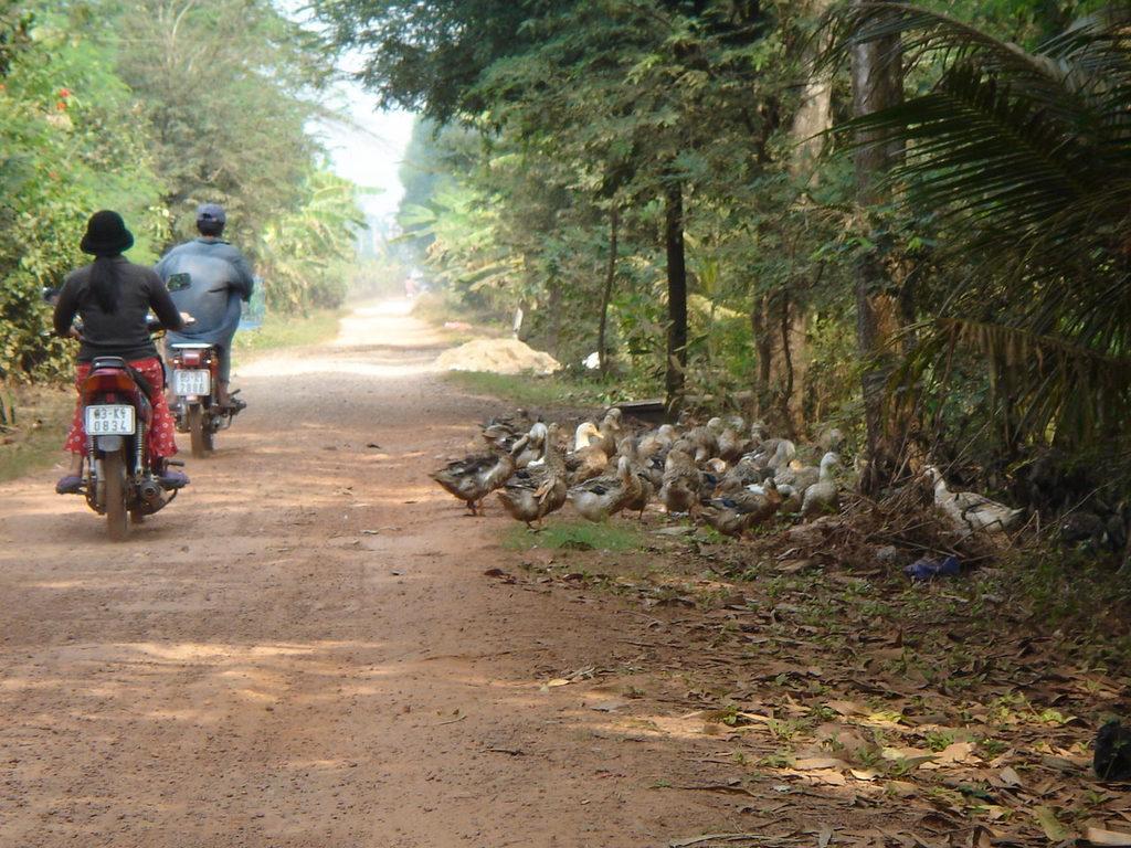 道端のアヒル(ga)
